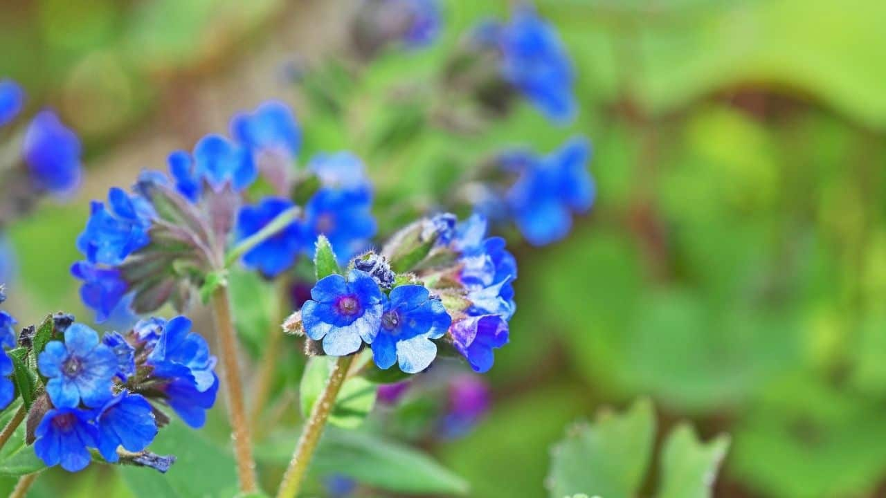 14 Best Plants for North Facing Gardens – Shade is Great! 11