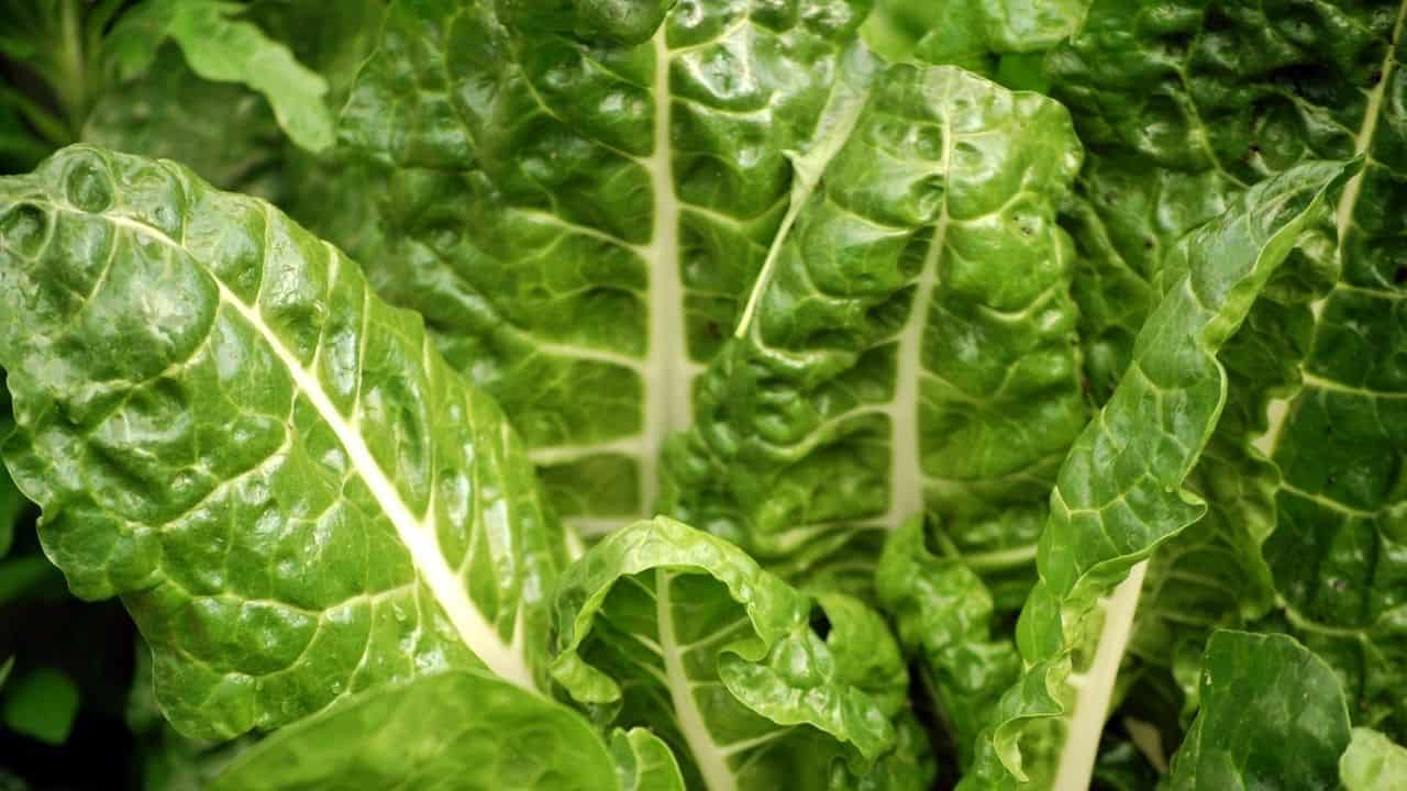 11 Popular Vegetables to Grow Yourself 9