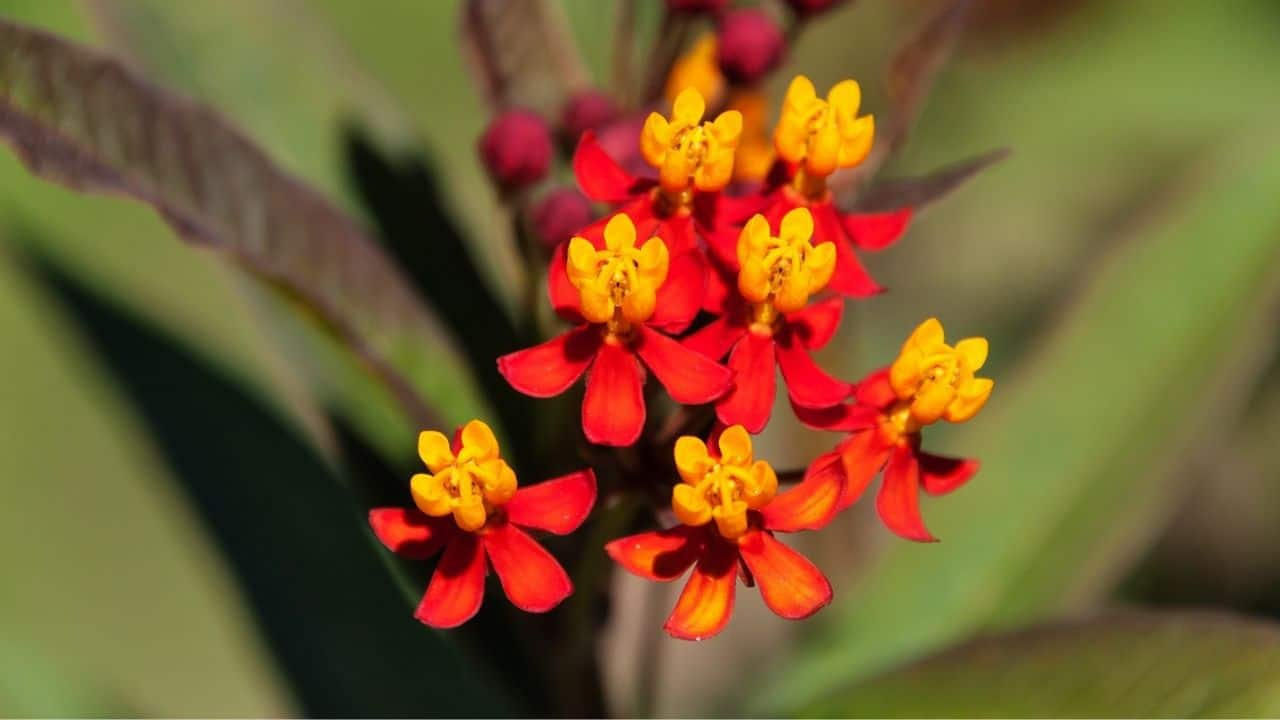 14 Best Plants for South Facing Gardens — Nr. 7 Is My Fav! 10