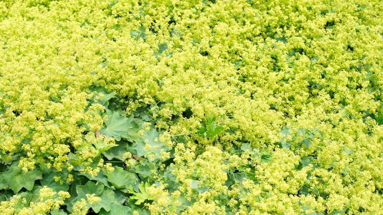 14 Best Plants for North Facing Gardens – Shade is Great! 12