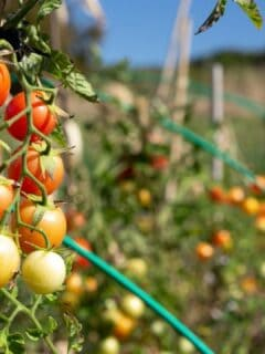 11 Low-Maintenance Vegetables That Everybody Can Grow