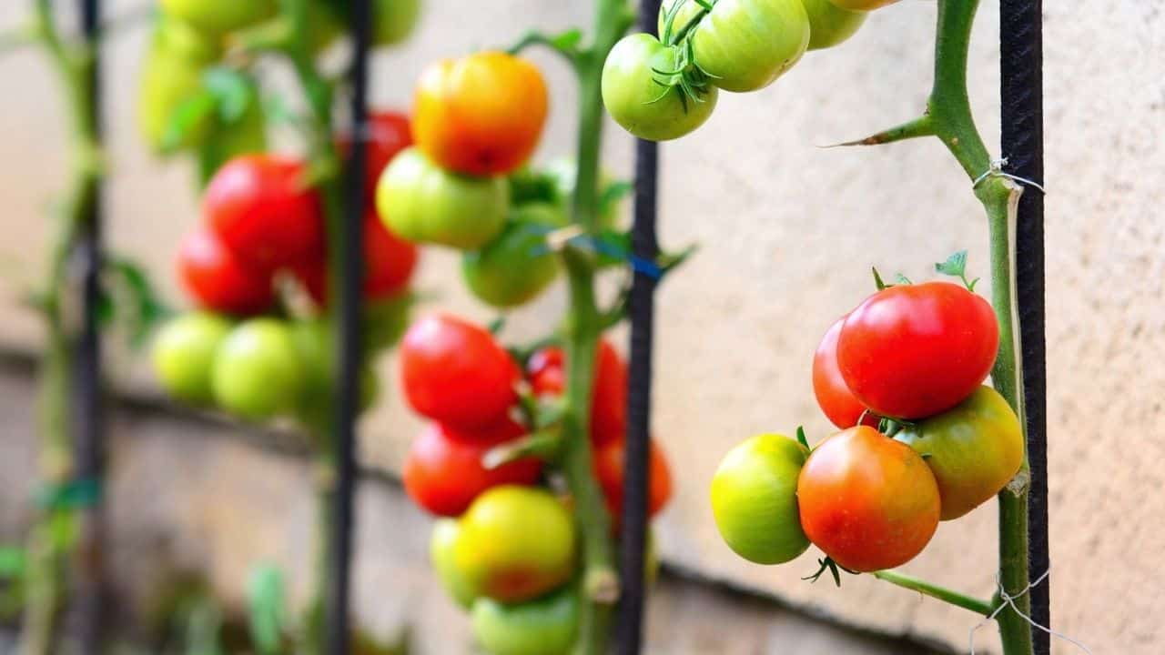 11 Popular Vegetables to Grow Yourself 11