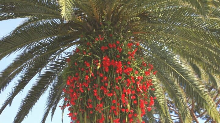Which Plants Go Well with Palm Trees?
