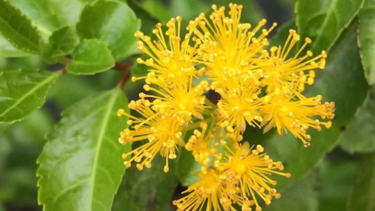 14 Best Plants for North Facing Gardens – Shade is Great! 1