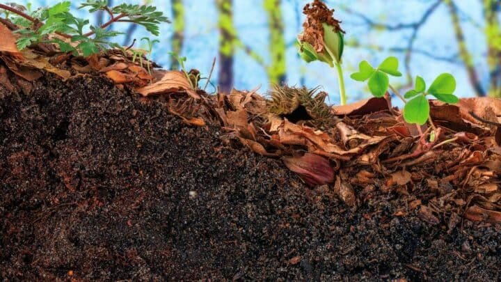 A Guide to Topsoil – Why it is Essential for Gardening