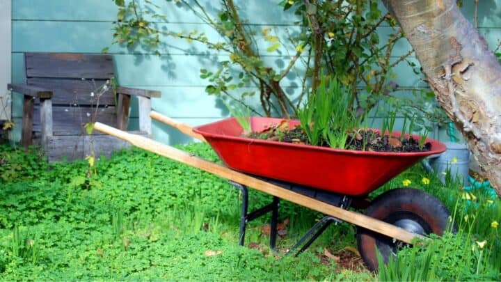 8 Best Wheelbarrows for Gardening – Get Help With The Heavy Lifting