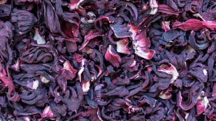 How to Dry Hibiscus Flowers – 3 Ways that Work