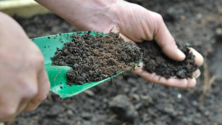 Ideal Soil to Compost Ratio – Gardening with Black Gold Simplified
