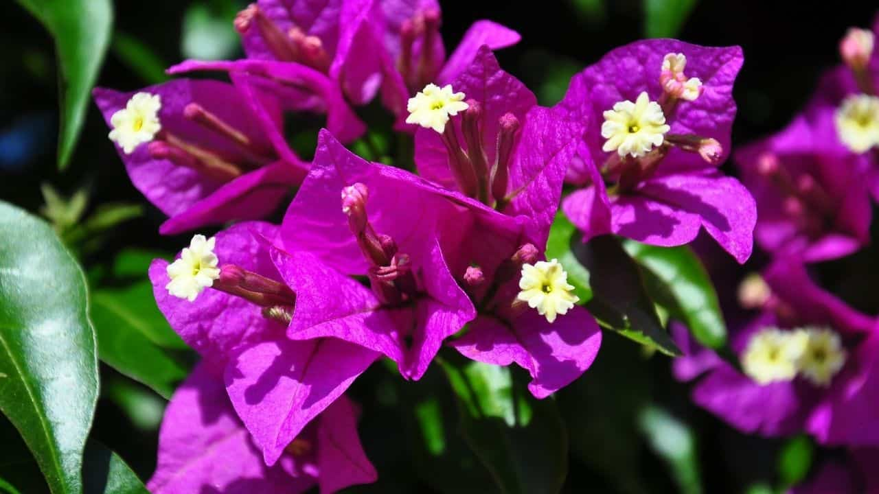 14 Best Plants for South Facing Gardens — Nr. 7 Is My Fav! 1