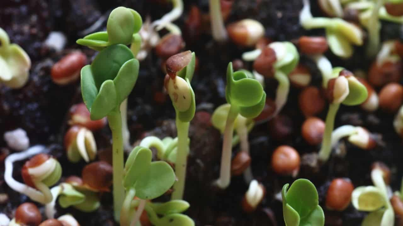 14 Easiest Vegetables to Grow from Seed 2