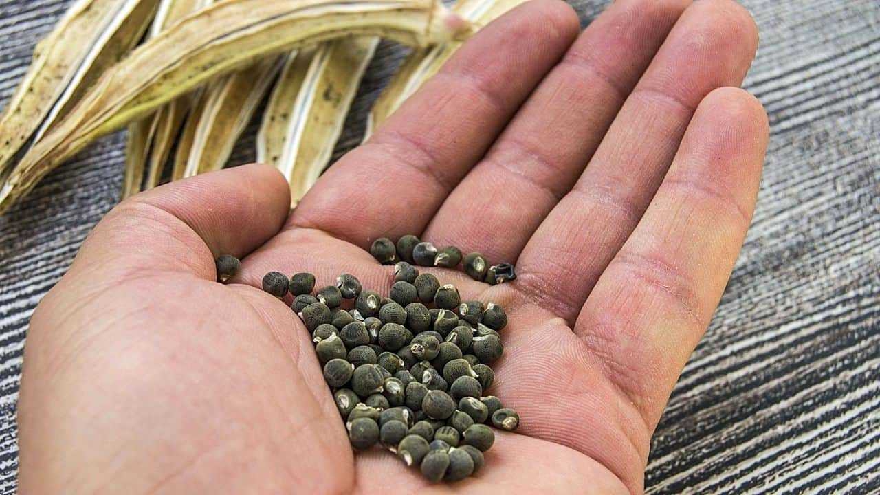 14 Easiest Vegetables to Grow from Seed 5