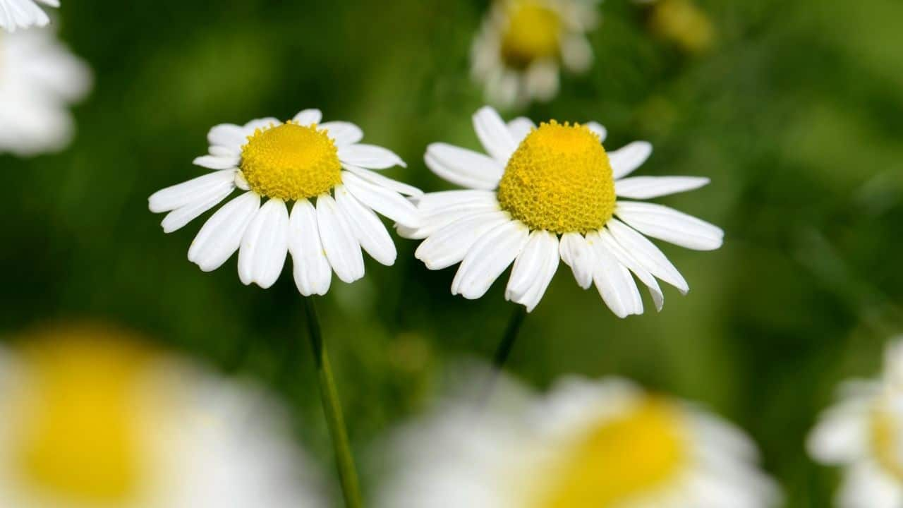 14 Best Plants for South Facing Gardens — Nr. 7 Is My Fav! 2