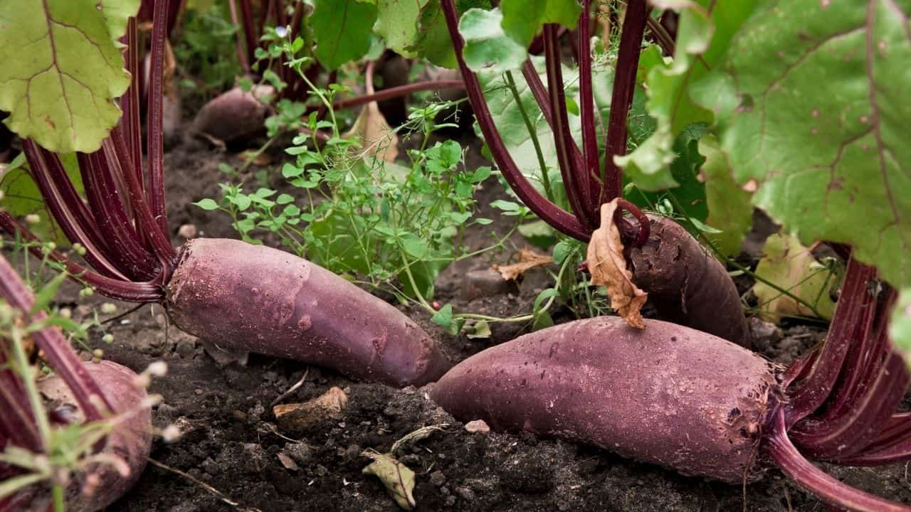 11 Popular Vegetables to Grow Yourself 2