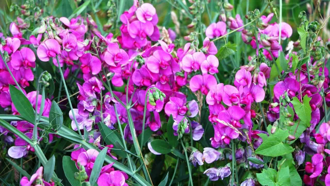 14 Best Plants for North Facing Gardens – Shade is Great! 5