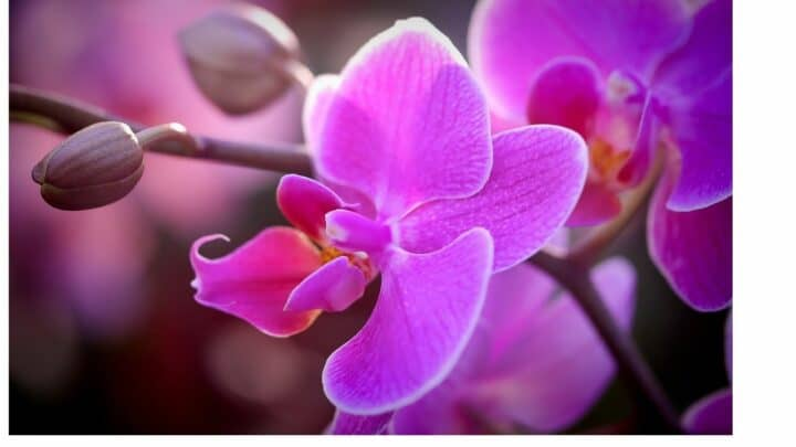10 Best Places to Buy Orchids Online