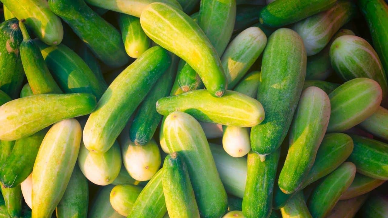 12 Best Vegetables to Plant in Spring 11