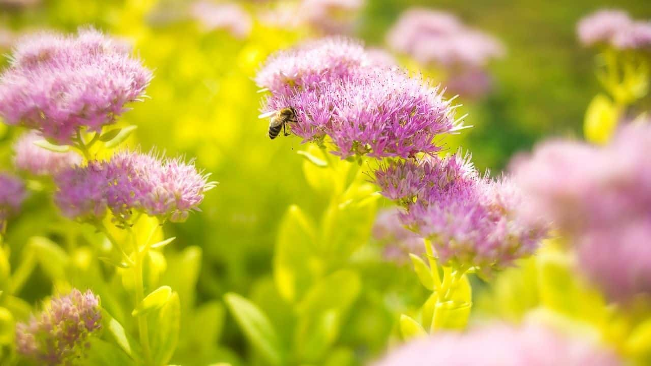 14 Best Plants for South Facing Gardens — Nr. 7 Is My Fav! 4