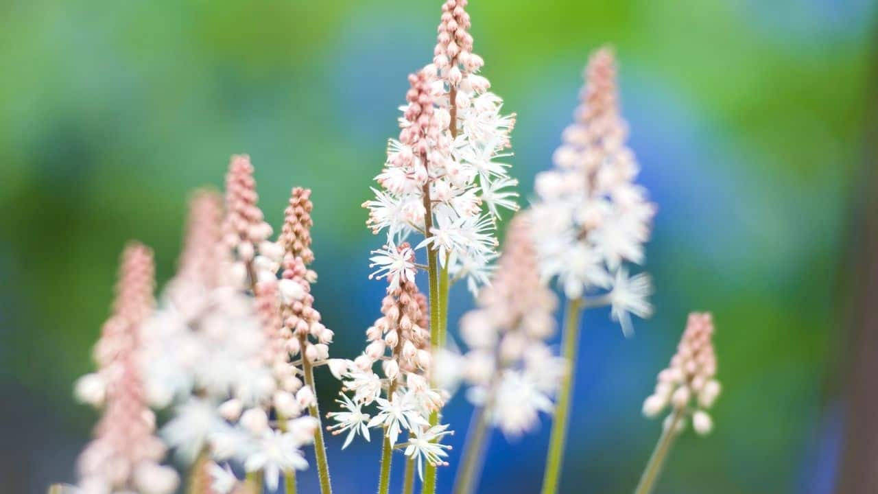 14 Best Plants for North Facing Gardens – Shade is Great! 6