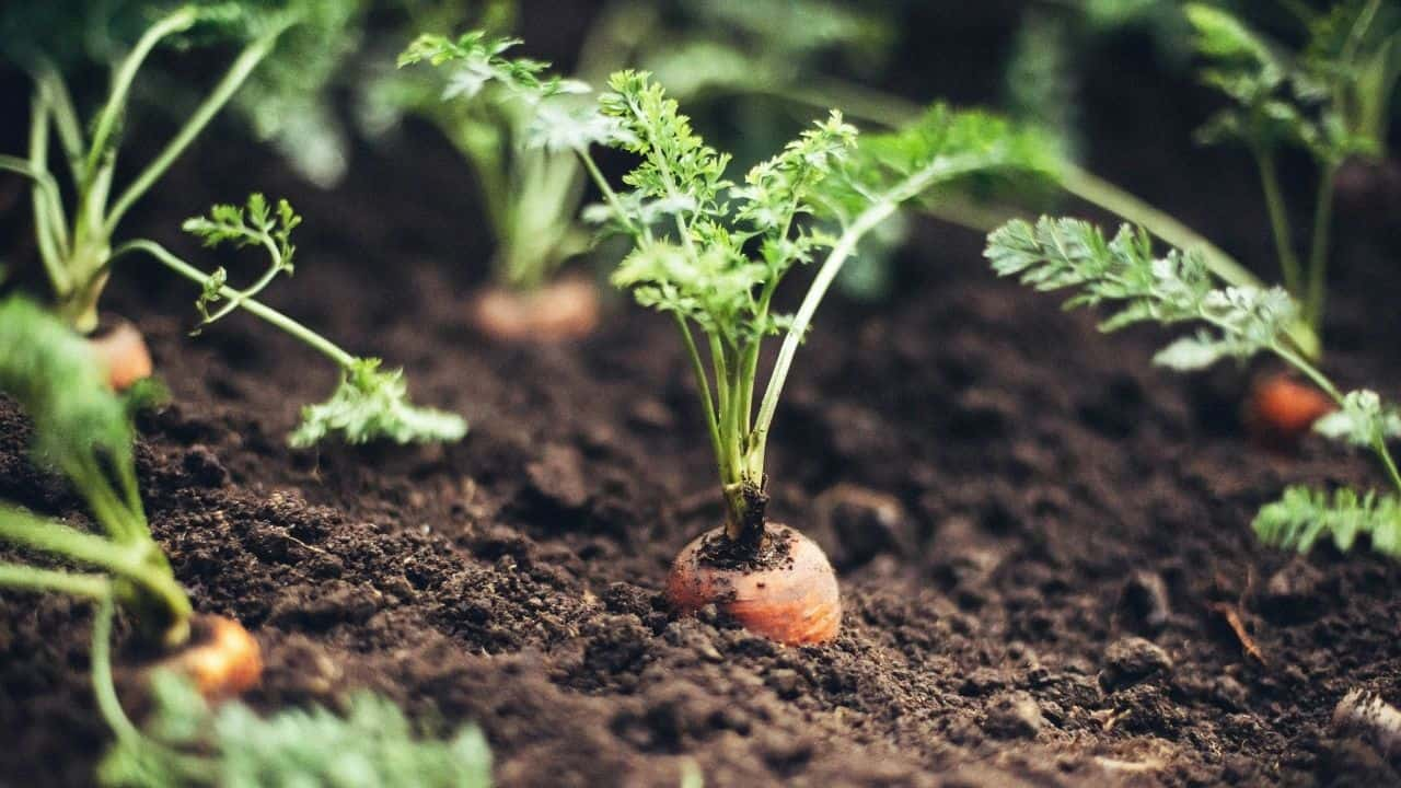 11 Popular Vegetables to Grow Yourself 4