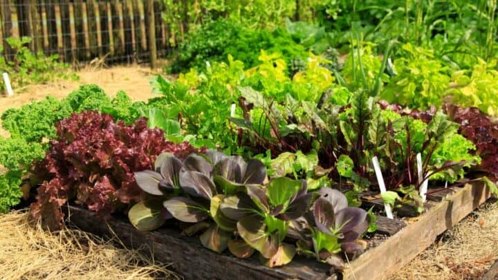 11 Hardy Vegetables To Grow in your Garden