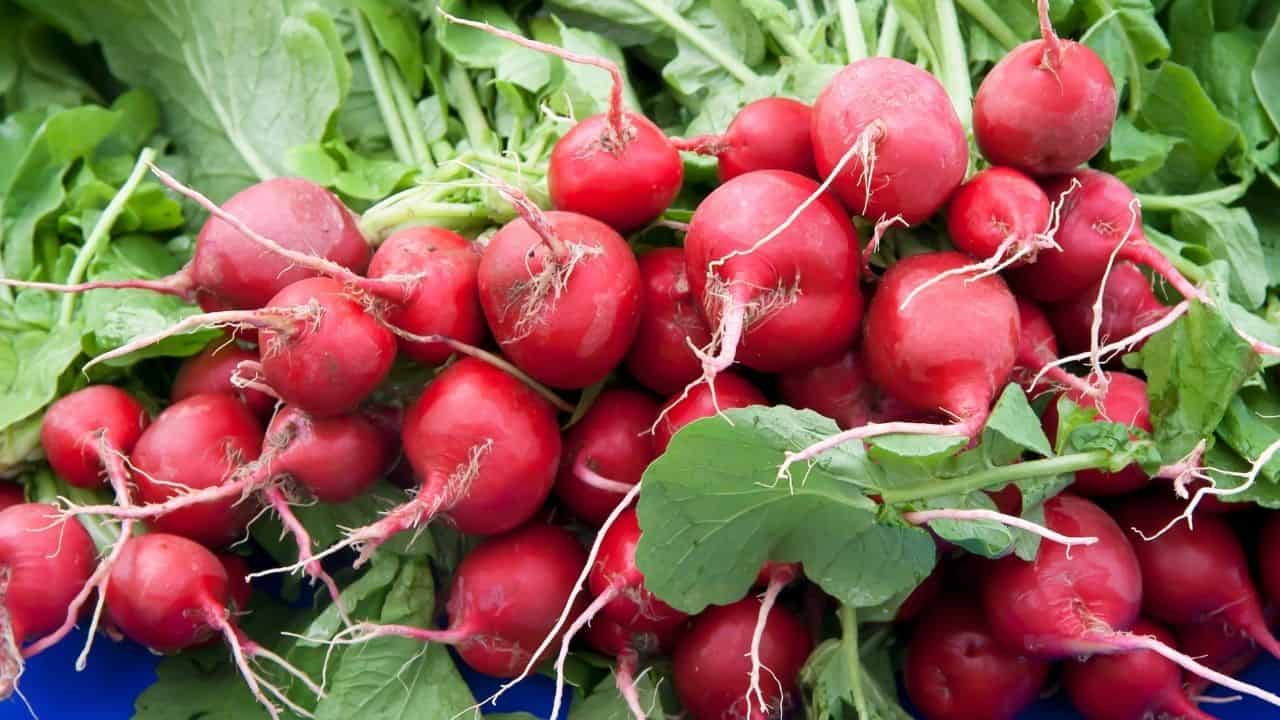 11 Hardy Vegetables To Grow in your Garden 4