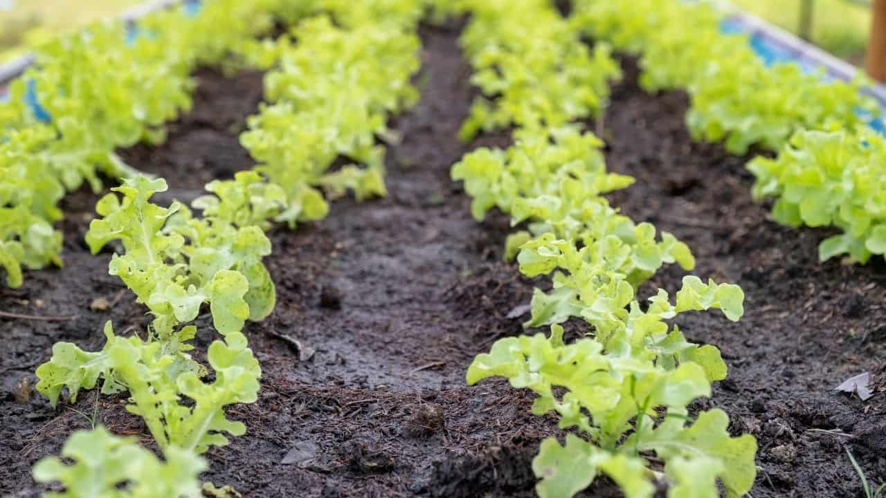 11 Popular Vegetables to Grow Yourself 5