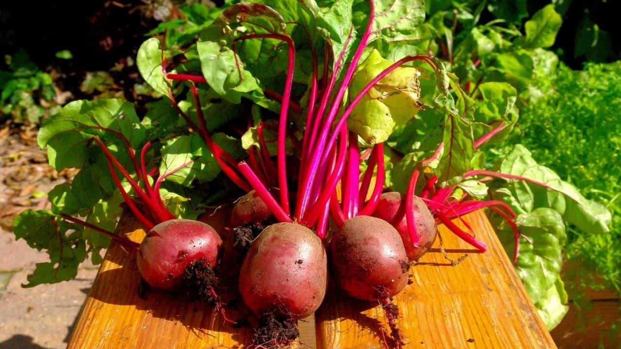 11 Hardy Vegetables To Grow in your Garden 9
