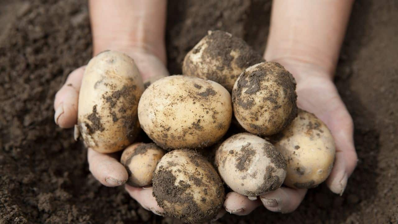 11 Hardy Vegetables To Grow in your Garden 10