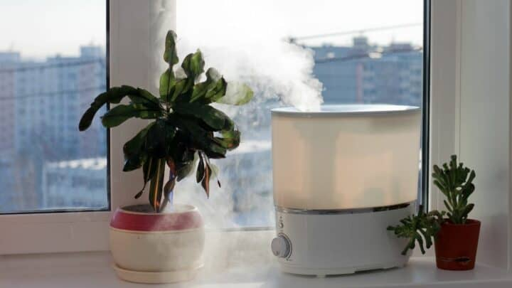 The 10 Best Humidifiers for Plants
