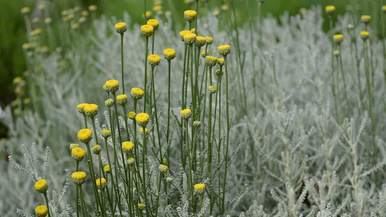 14 Best Plants for South Facing Gardens — Nr. 7 Is My Fav! 8