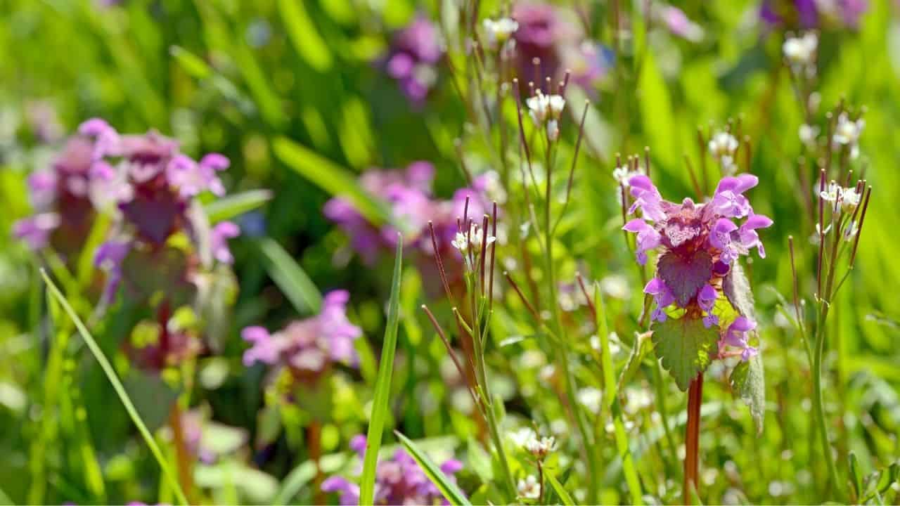 14 Best Plants for North Facing Gardens – Shade is Great! 10