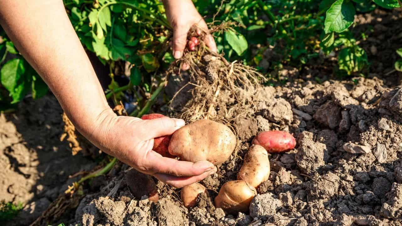 11 Popular Vegetables to Grow Yourself 8