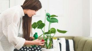 Best Fertilizers for Houseplants