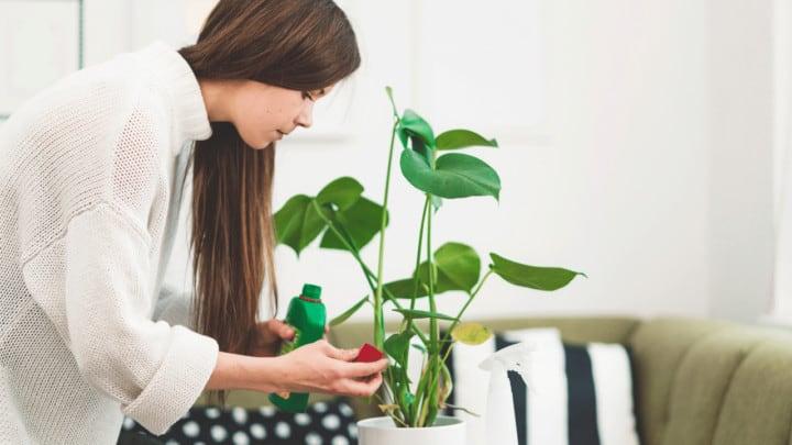 11 Best Fertilizers for Houseplants – A Buyers Guide