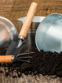Best Potting Soil for Houseplants