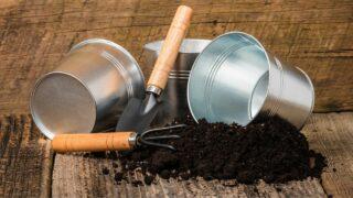 Best Potting Soil for Houseplants