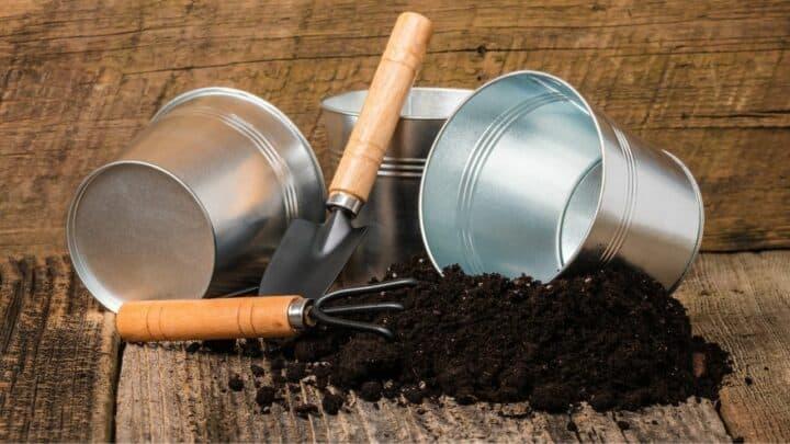 Best Potting Soil for Houseplants — The 11 Winners!