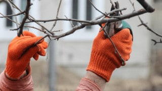 Where Do You Cut Plants When Pruning