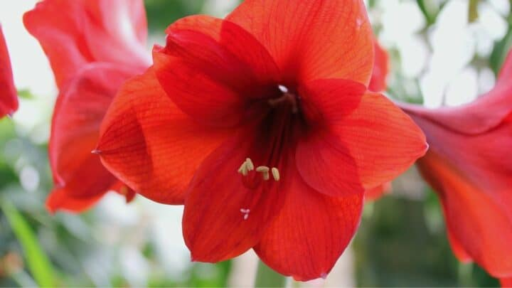 Hibiscus Pests and Diseases – What You Have to Know