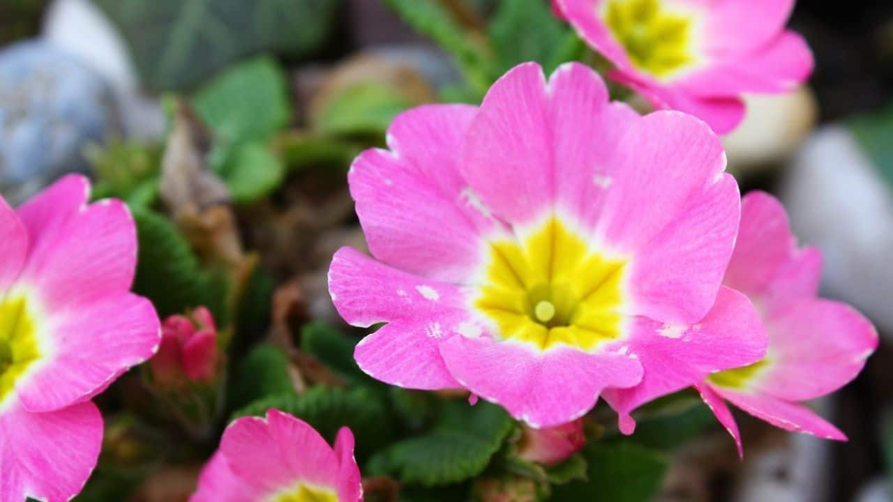 14 Best Plants for East Facing Gardens: Nr. 2 Is Our Favorite! 13