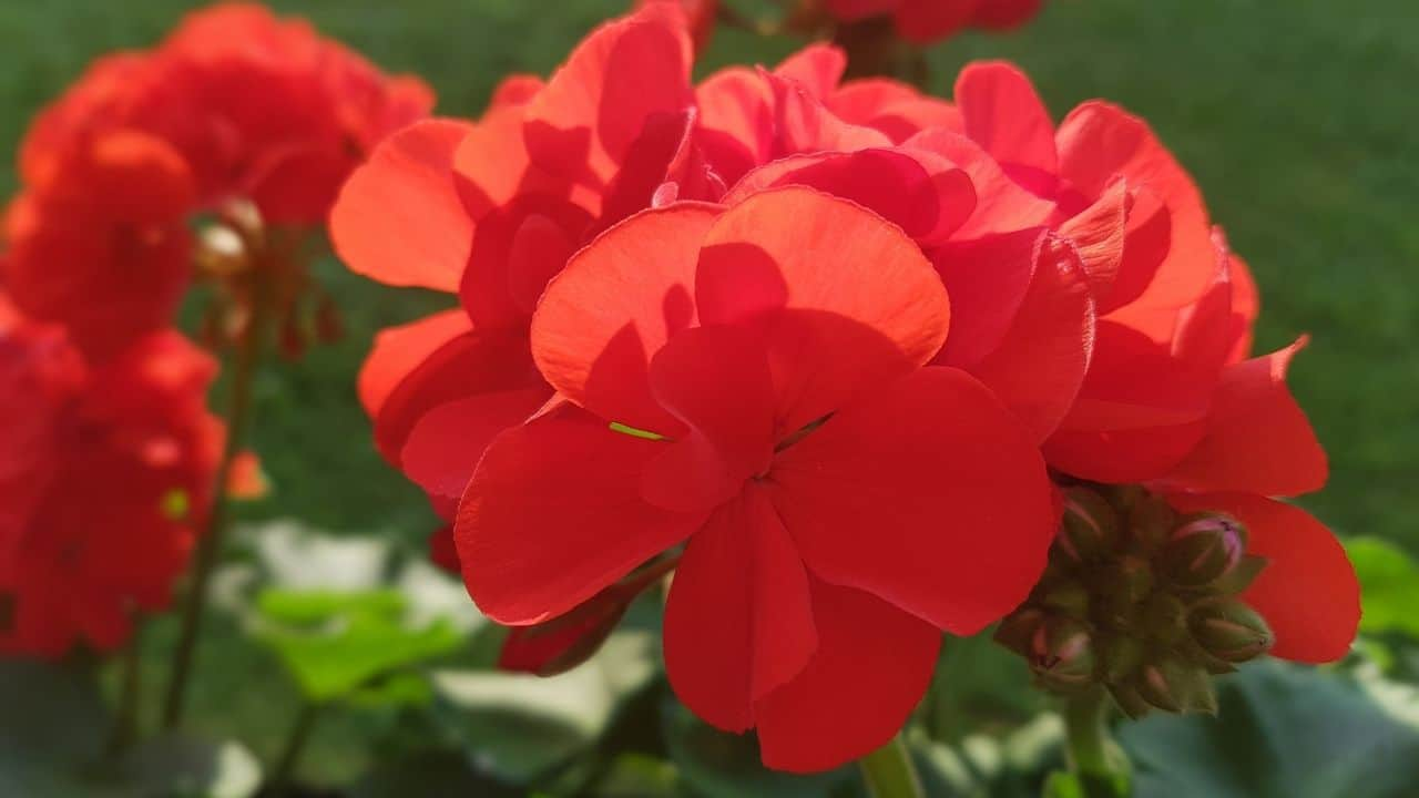 15 Best Plants for West Facing Gardens – Enjoy the Afternoon Sun! 12