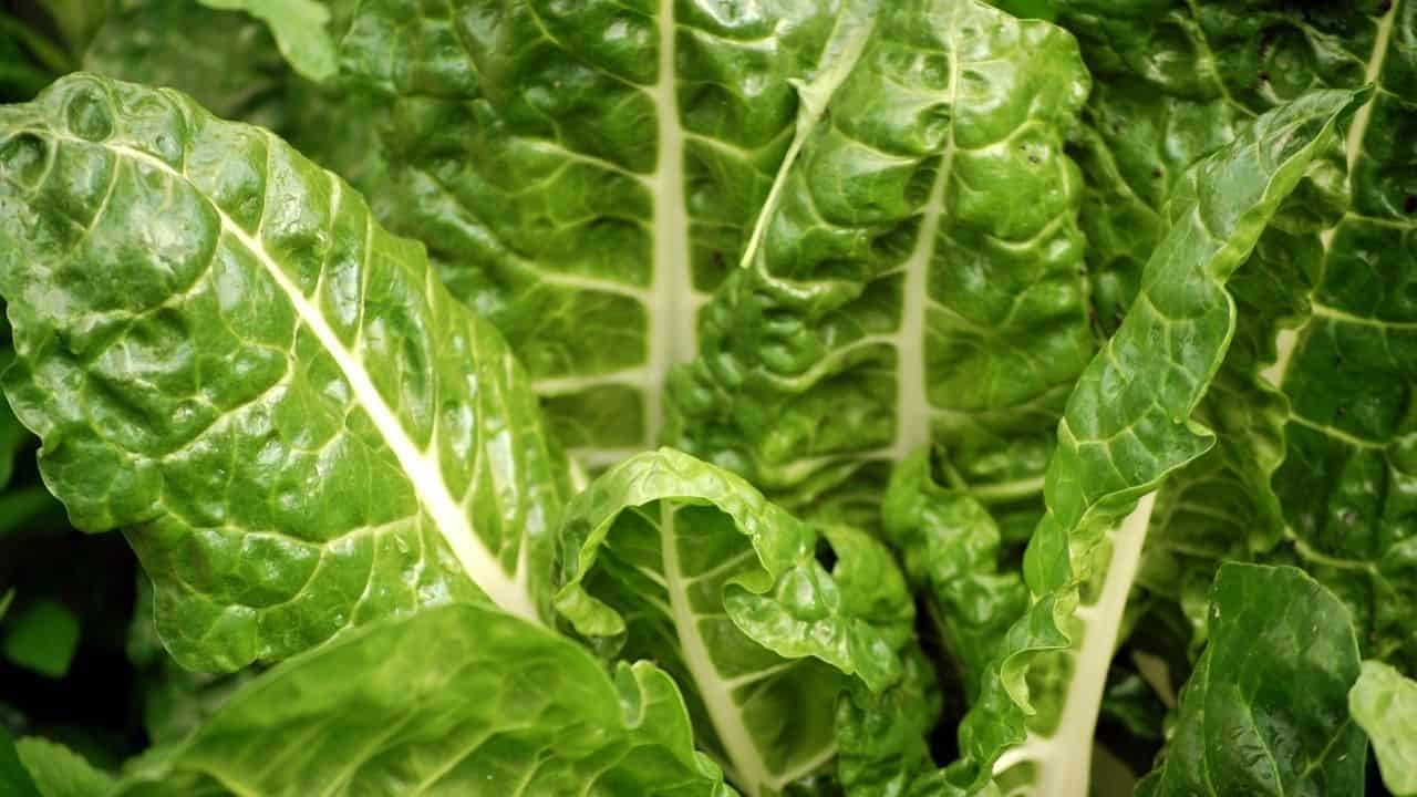 15 Best Vegetables for Hydroponics 8