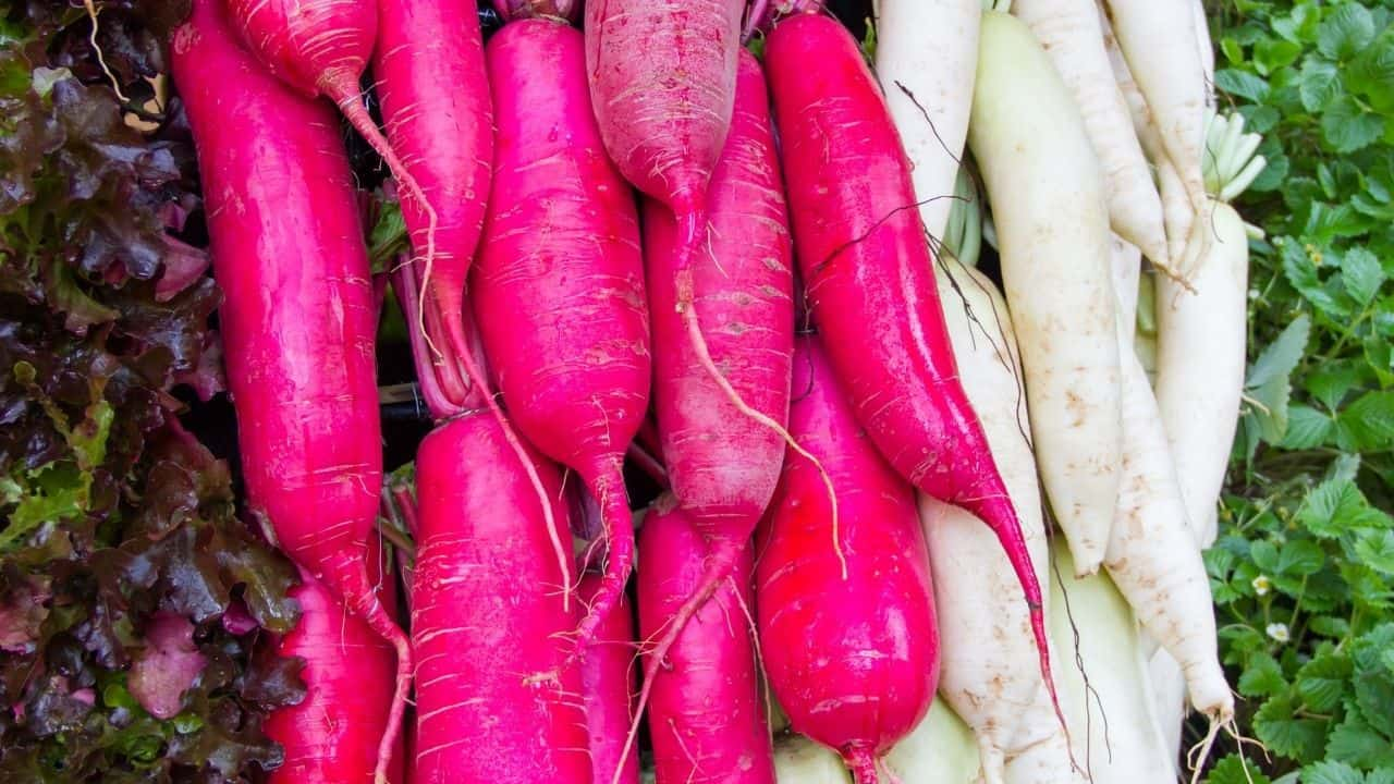 15 Best Vegetables for Hydroponics 11