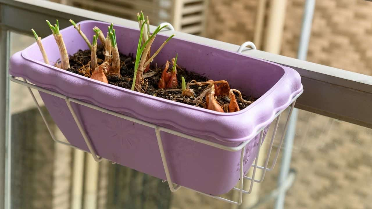 15 Best Vegetables for Hydroponics 15