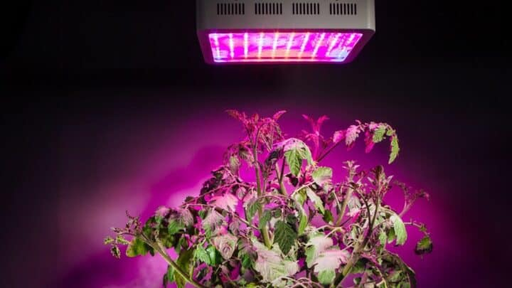 Are LED Grow Lights Worth It? The Answer!