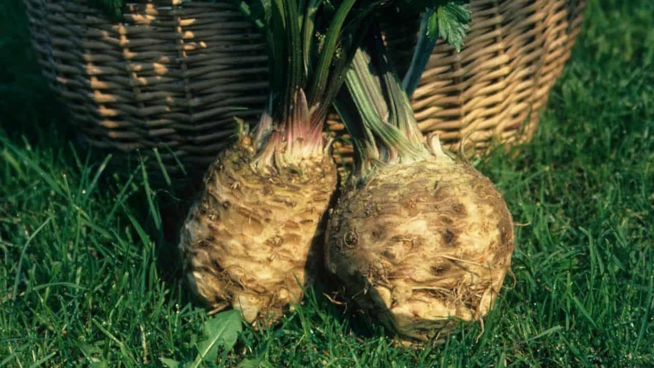 11 Vegetables Grown Underground 3
