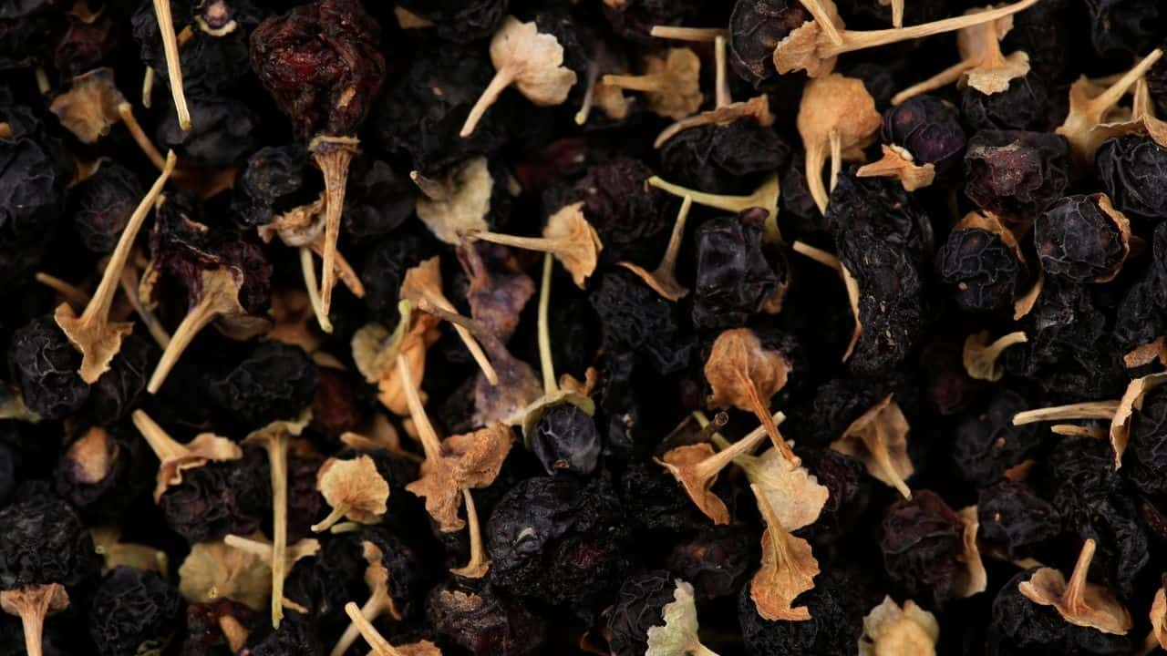Goji Berry Varieties - 5 Types from Around the World 2