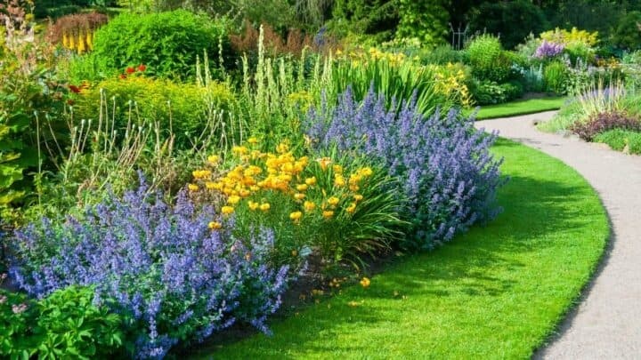 15 Best Plants for West Facing Gardens – Enjoy the Afternoon Sun!
