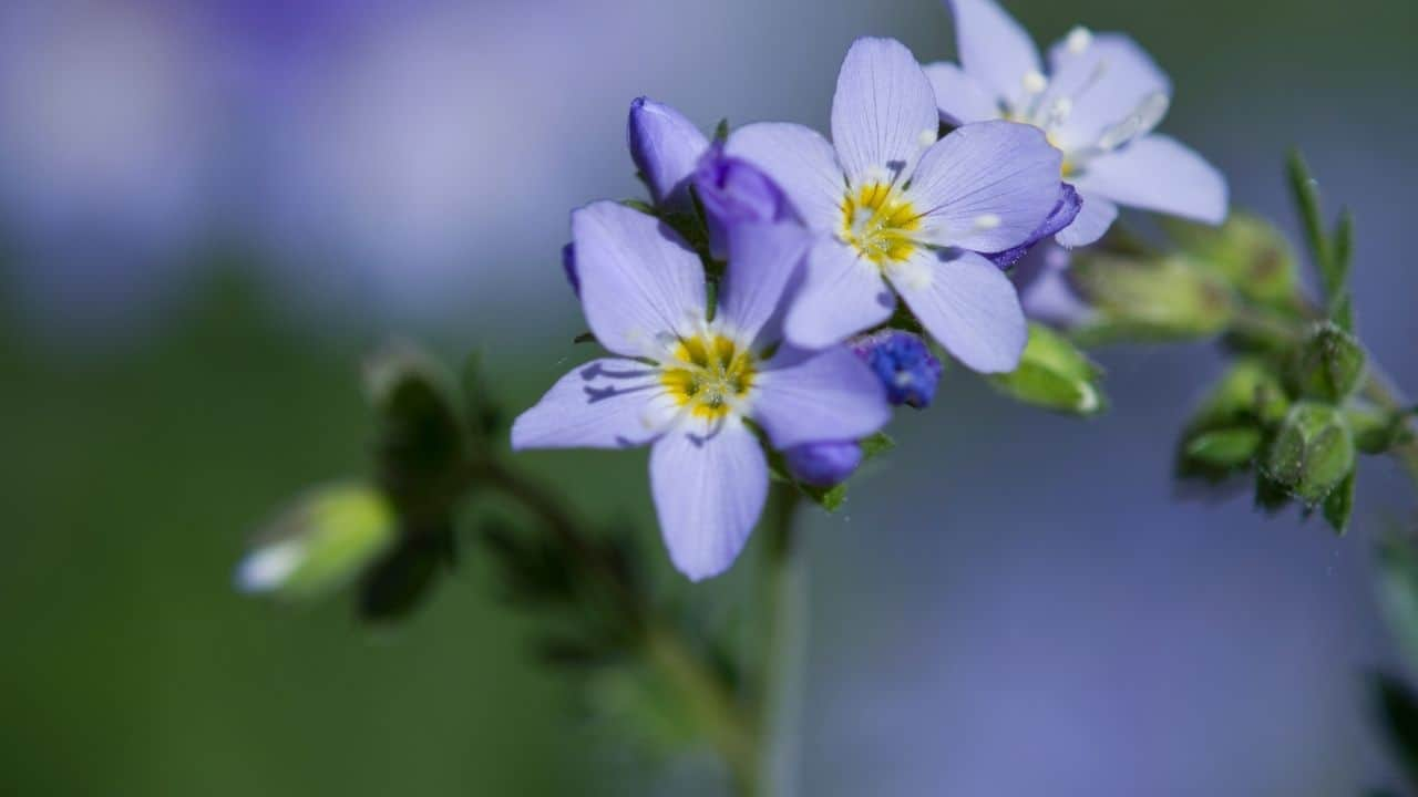 14 Best Plants for East Facing Gardens: Nr. 2 Is Our Favorite! 4