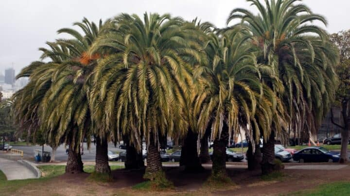 What is the Best Soil for Palm Trees? Indoor and Outdoor Recommendations